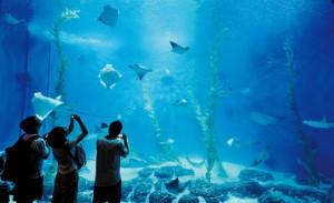 Shanghai Oceaan Aquarium